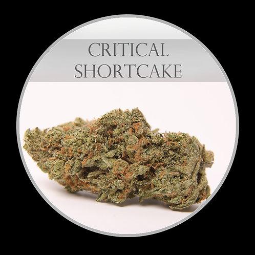 Critical Shortcake AAA