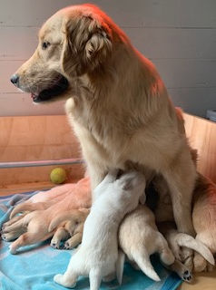Ivy's litter Jan 2020