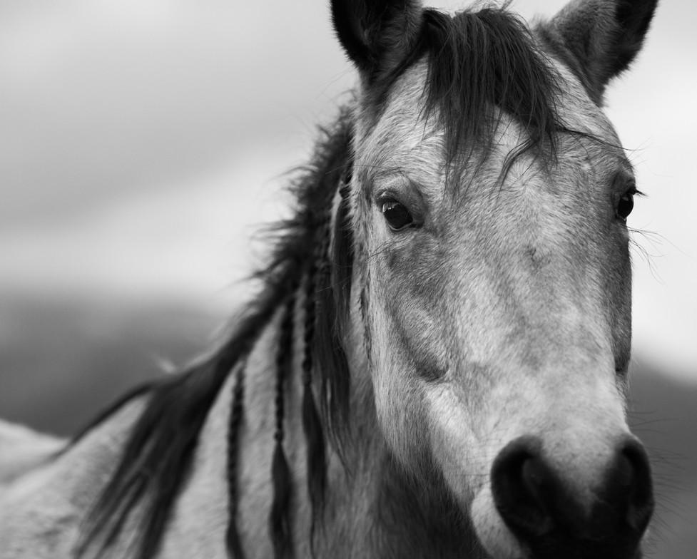 Oregon Horse_bw_4x3.jpg