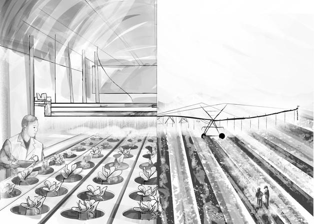 VML-COTTON-ConceptBoards2b-08132020-wmca