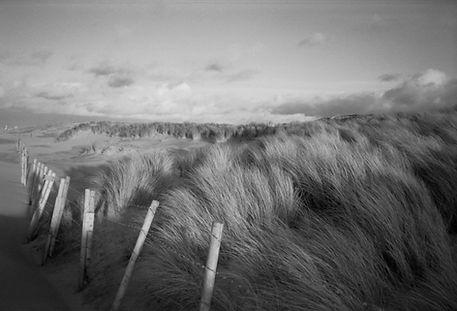 Dutch Dunes: Laura Chen