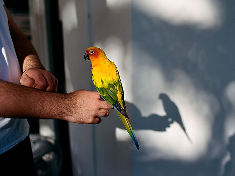colorful parrot sitting on a hand