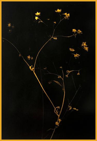Elegant Petals: Marcy Palmer