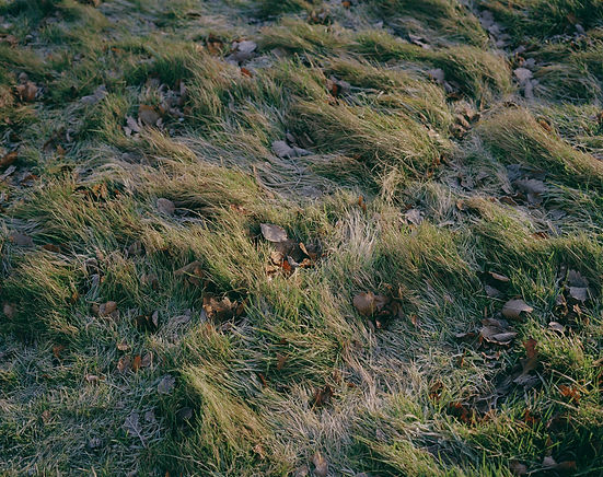 grass with leaves in it
