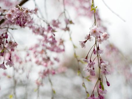 2021 Spring Sessions | Fort Wayne Senior Photographer