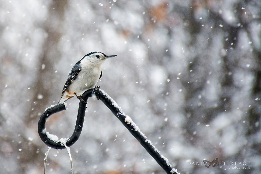 Bird in snowfall