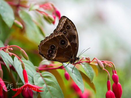 Photographing Butterflies | Fort Wayne Botanical Conservatory