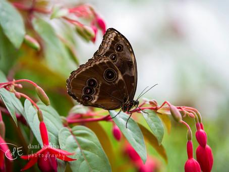 Photographing Butterflies   Fort Wayne Botanical Conservatory
