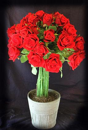 Red Rose Silk Shrub
