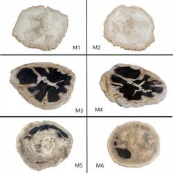 Medium Petrified Wood Slab