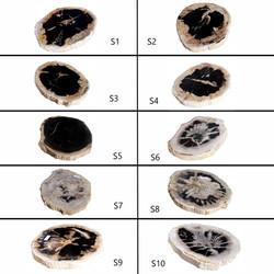 Small Petrified Wood Slab
