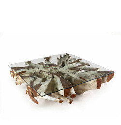 Teak-Root-Coffee-Table-in-natural-finish