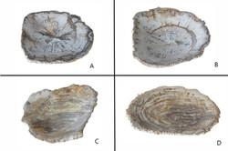 Petrified Wood Organic Bowl