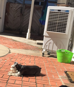 Cooling Dogs TOO