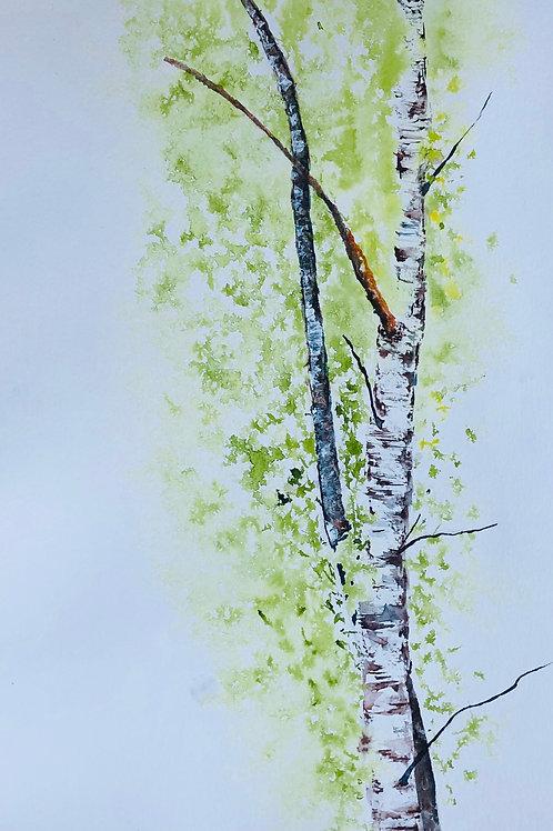 Bouleaux au printemps 32x52 cm