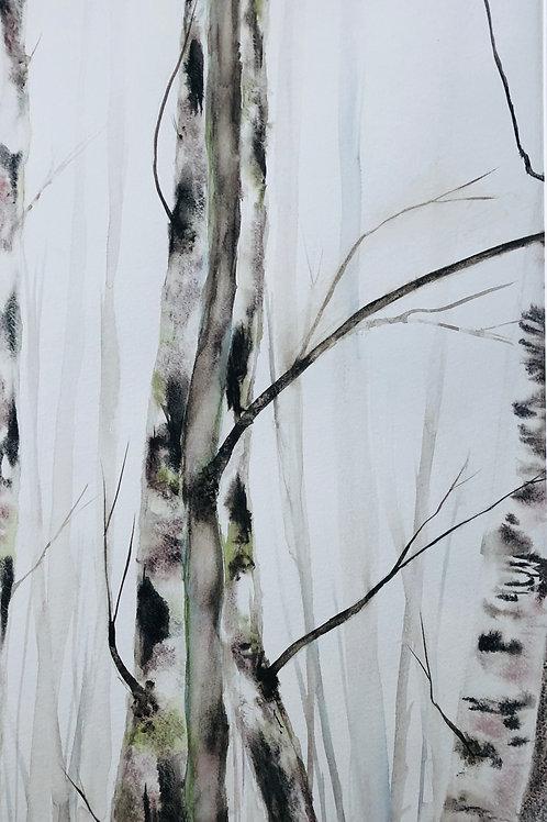 Forêt de bouleaux 31x55 cm