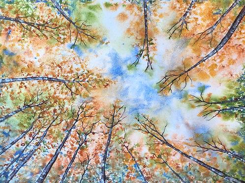 Cimes en automne 55x42 cm