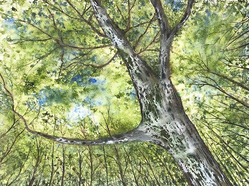 Somptueux arbre 41x55 cm