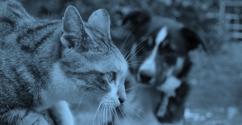 catdog.png