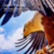 Juan Ibanez - Eagle Departure EP [IN2U]
