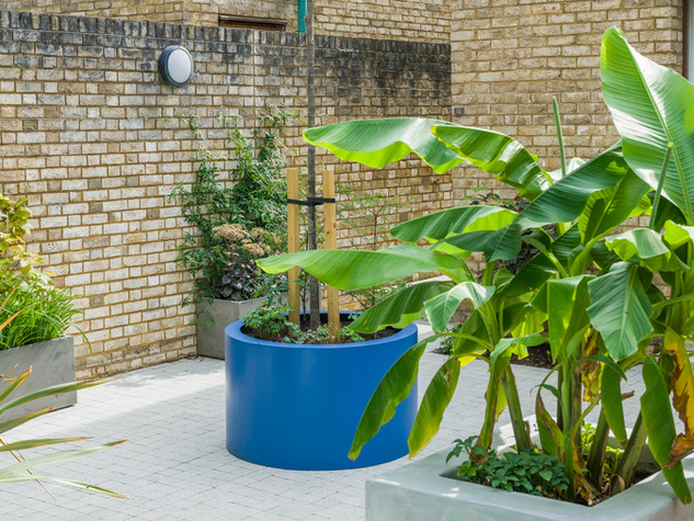 Planters and with tropical style foliage in a morderncourtyard gardenin cambridge