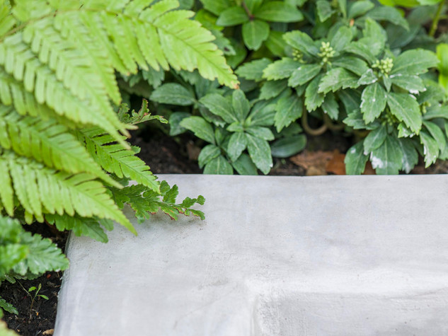 Ferns leaves against a polished concrete raised bed wall