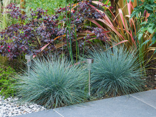 Exotic style planting in a modern small garden in cambridge