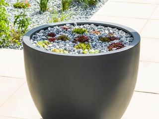 Pot with semperivum