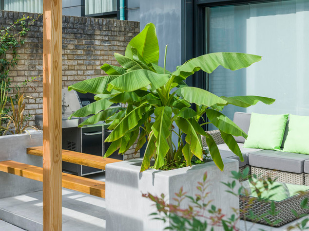 Contemporary garden in cambridge with rendered and polished raised beds and tropical planting style