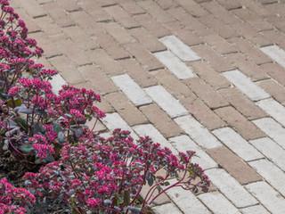 Sedum plants next to a contemporary brick patio