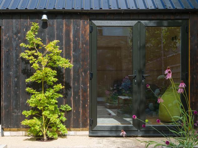 View of an acer palmatum against black cladding in a modern cambridge garden design
