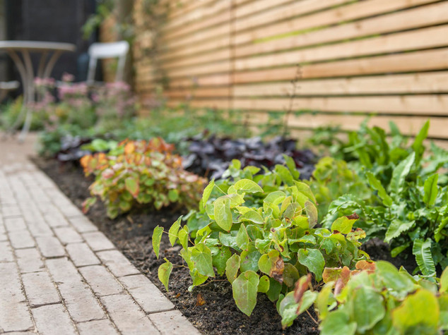 brick path and epimedium plants with slatted larch fence behind