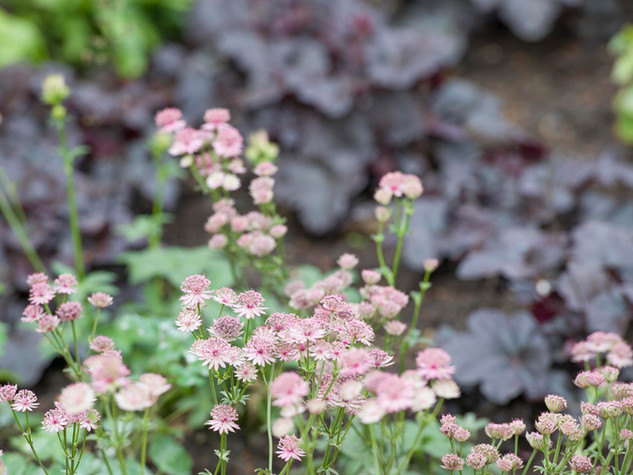 Close up photo of a modern planting scheme