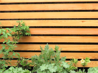 Slatted cedar fencing constructed from cedar battens with planting in front