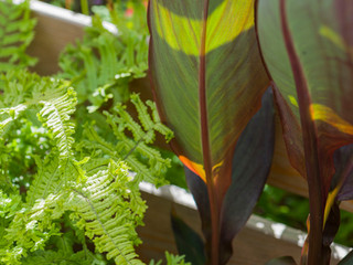 Close up of a canna leaf and fern against a slatted larch fence in cambridge