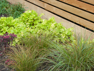 Close up of grasses and heuchera plants next to a modern horizontal wooden fence