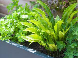 Close up planter