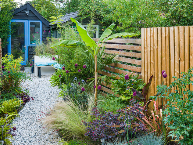 View of a modern garden design in cambridge featuring  exotic planting and a slatted larch fence