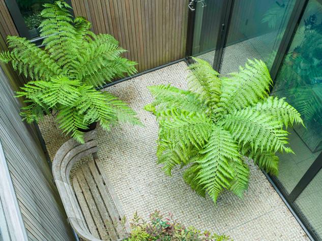 Contemporary courtyard garden design with gravel, tree ferns dicksonia antarctica and cedar timber cladding