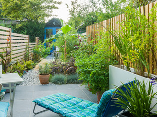 Sunny patio in cambridge with a sun louner and tropical style planting