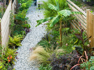 Overview of a stylish small garden in cambridge with a a modern planting scheme and banana tree.