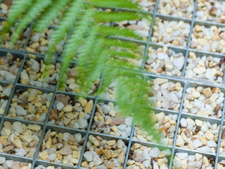 Close up of modern box grating with gravel in a contemporary courtyard garden in cambridge