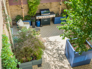 Contemporary courtyard garden in cambridge with large central tree and bamboo