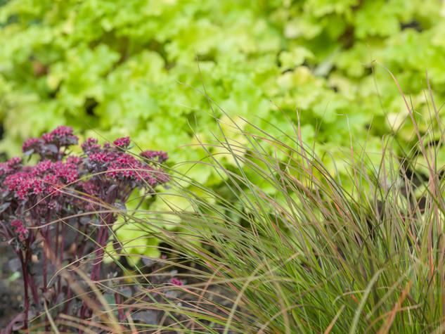 Close up photo of a contemporary planting scheme