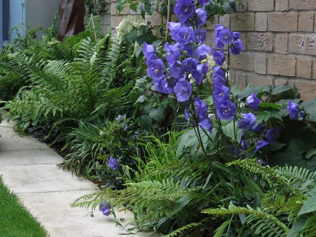 Sawn limestone paving with modern planting