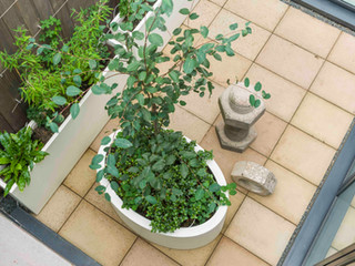 Courtyard garden design in cambridge with sawn sandstone paving and contemporary  white fibreglass planters