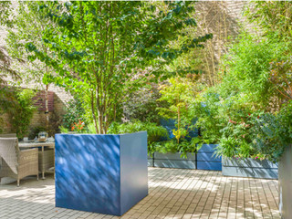 Striking modern design for a courtyrard garden in cambridge.  A large central tree in a square pot with tall bamboo ferns and acer trees behind