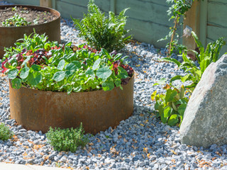 Modern gravel garden design in cambridge featuring a raised bed, rocks and producive beds