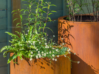 Two tall round corten steel pots with contemporary planting in cambridge England