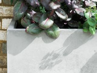 Concrete planter with sedum in a modern cambridge garden